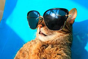 Un gato de vacaciones